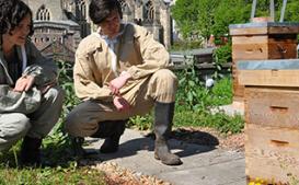 布里斯托大学与互动科学中心携手创建了蜂巢中的生活