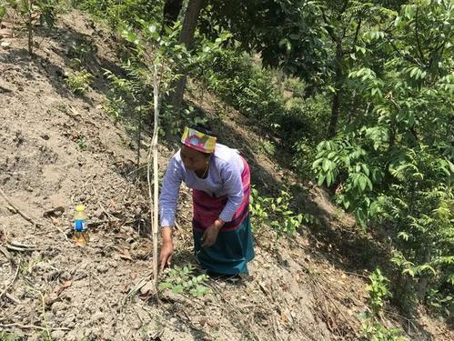 勐海县布朗山乡的一条溪谷发现翼囊蕨的自然分布居群