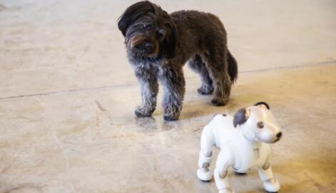 狗的复仇索尼爱宝没有打动你毛茸茸的朋友