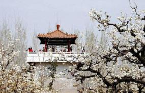 照旺庄中心初中根据莱阳梨乡传统文化在社团活动中开设了衍纸实践活动课程