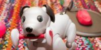 和索尼的机器狗一起生活是什么感觉