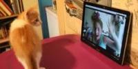如何使用Skype监视您的猫或狗
