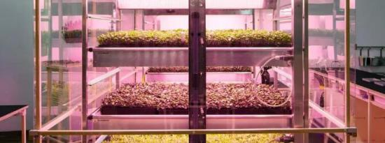 宜家Space10实验室培育未来食品