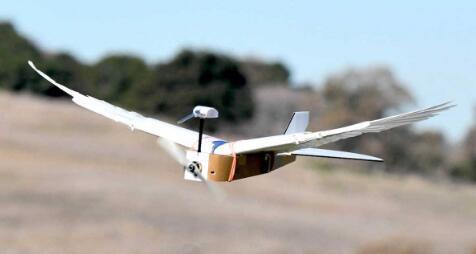 斯坦福大学的PigeonBot是一种装有真羽毛的机器鸟