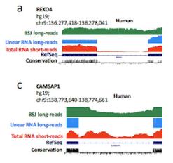 circRNA长读长测序发现自闭症相关微外显子