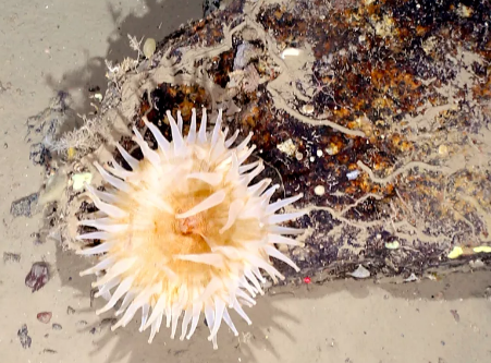 科学家发现南极海洋生物被冰封50年
